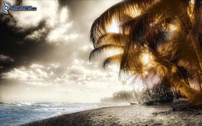 tengerpart, tenger, strand, pálmafák, nap, felhők