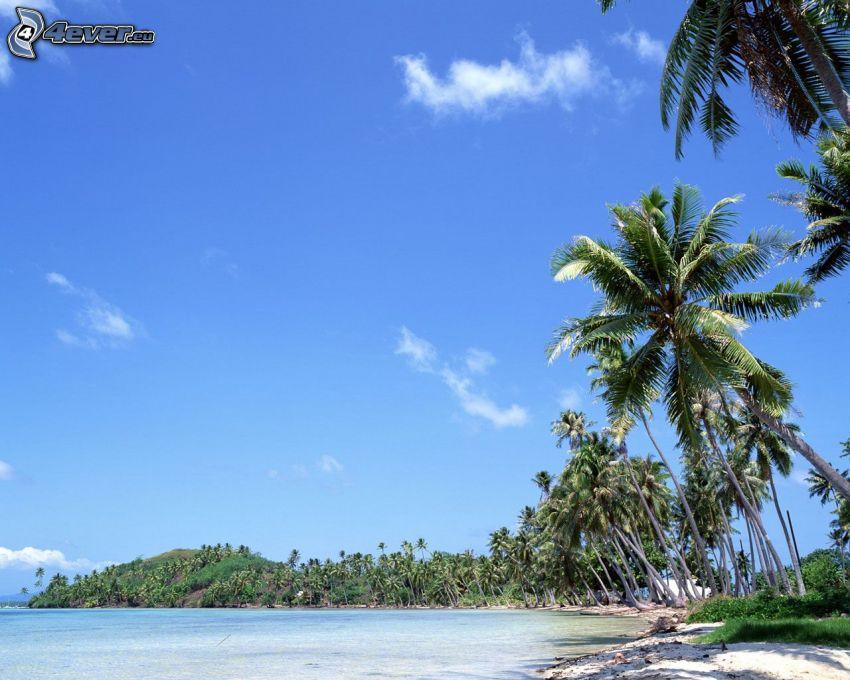 trópusi sziget, strand, pálmafák
