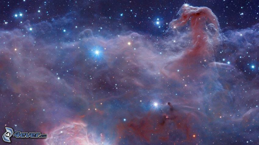 Lófej-köd, csillagok