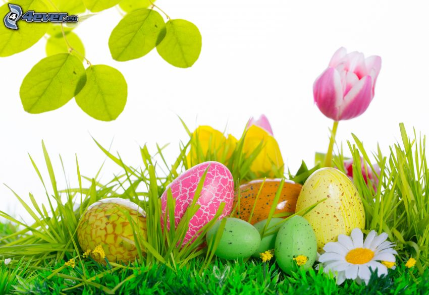 húsvéti tojások, tulipán, zöld levelek