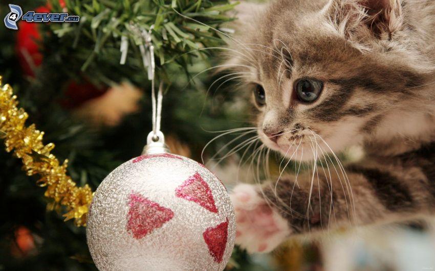 szürke kiscica, gömb karácsonyfadísz