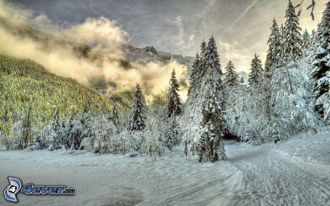 Alpy, ośnieżone drzewa, leśna droga