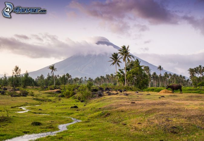 Mount Mayon, palmy, bawół, potoczek, Filipiny