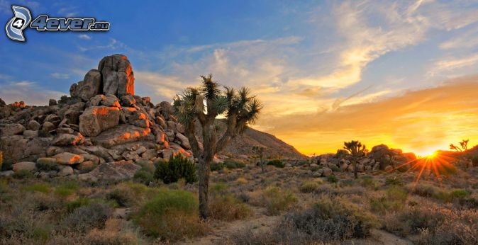 Joshua Tree National Park, skały, zachód słońca