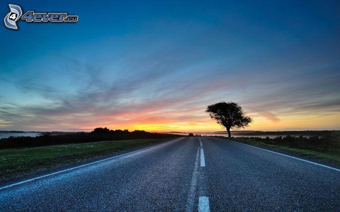 ulica, po zachodzie słońca, samotne drzewo