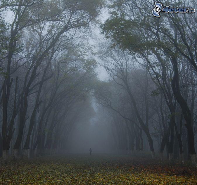mgla-w-lesie,-opadniete-liscie,-czlowiek