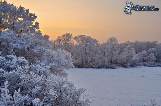 ośnieżone drzewa, zaśnieżona łąka, po zachodzie słońca