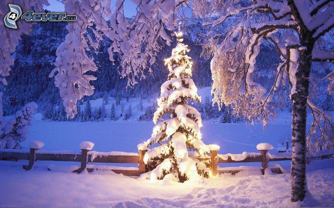 oświetlone drzewo, śnieżny krajobraz