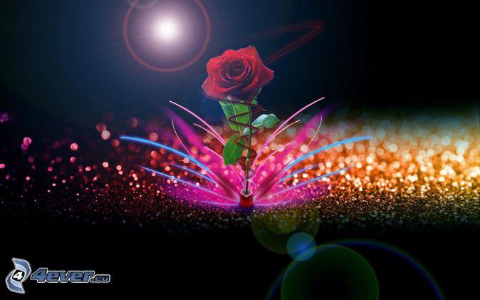 czerwona róża, kolorowe pierścienie, kolorowe linie