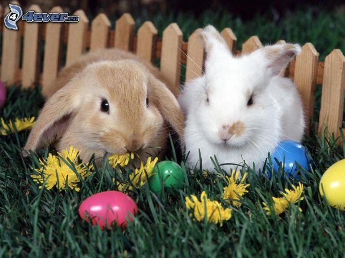 wielkanocne zajączki, jajka, kwiaty