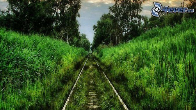 tory kolejowe, las, zieleń