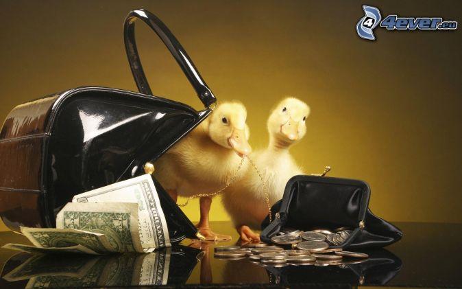 kaczuszki, pieniądze, torebka, portfel