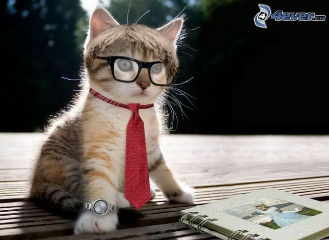 kot, okulary, krawat, zegarki