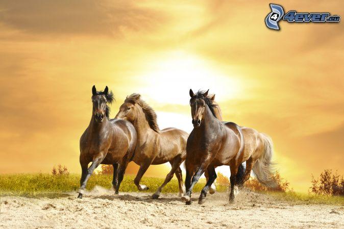 brązowe konie