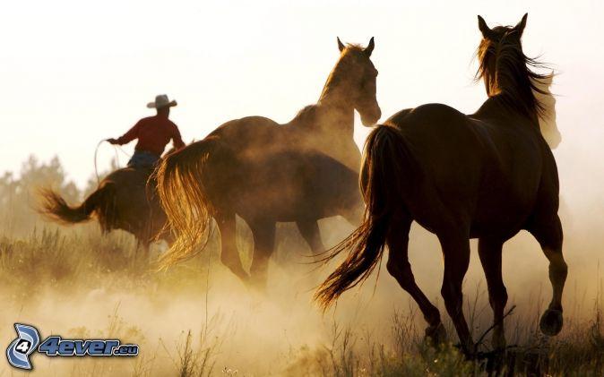 konie, jeździec