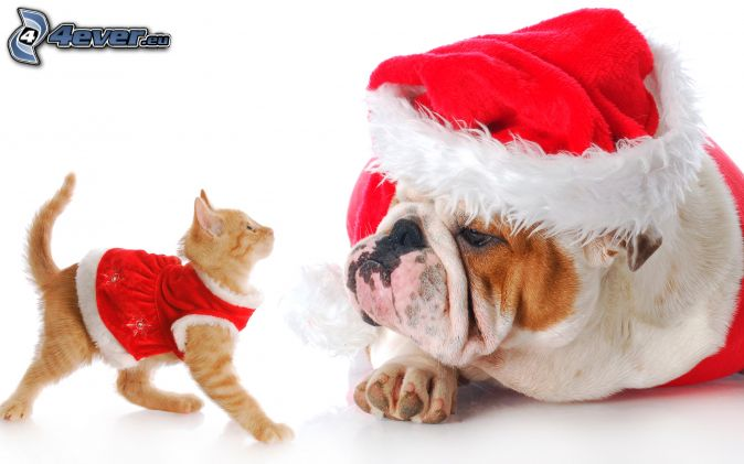 pies i kot, czapka Świętego Mikołaja