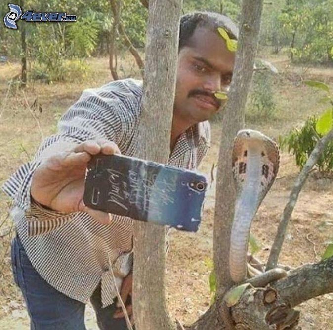 selfie, kobra, wąż na drzewie, telefon komórkowy