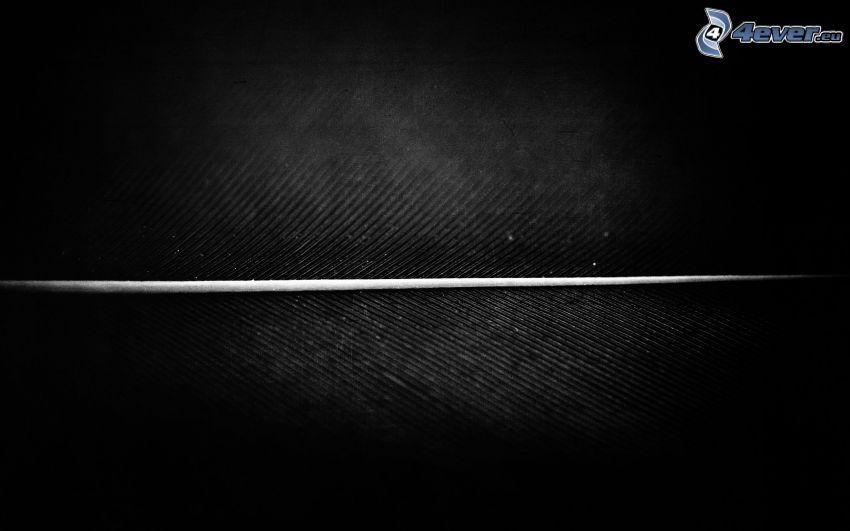 biała linia