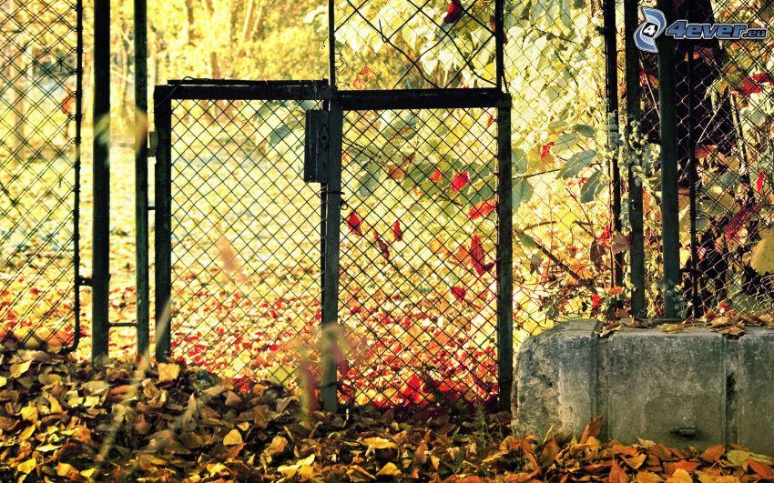 brama, ogrodzenie z drutu, Jesienne liście