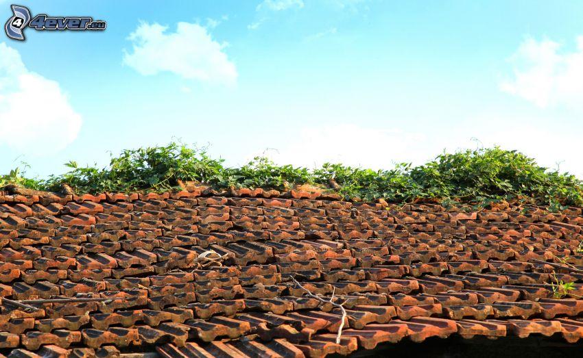 dach, rośliny