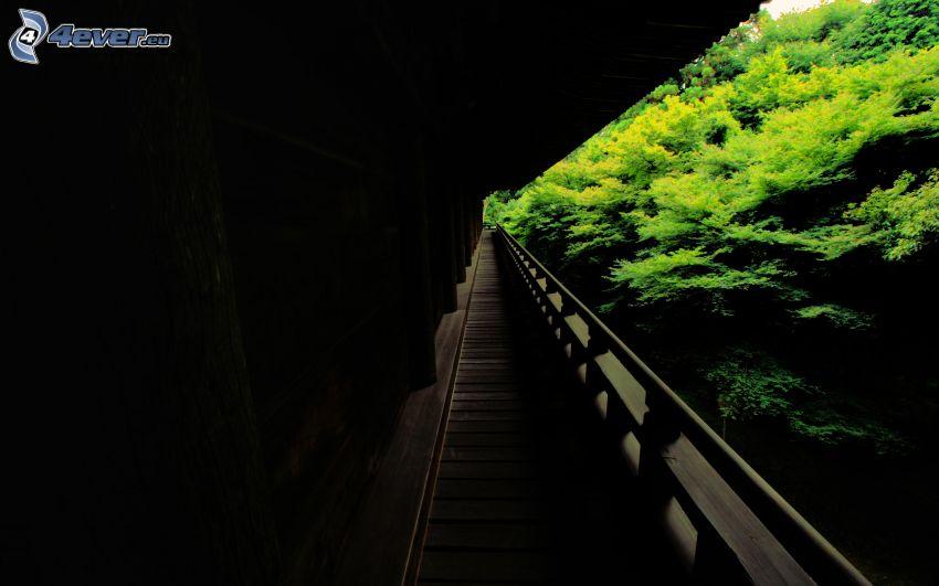 drewniany most, las