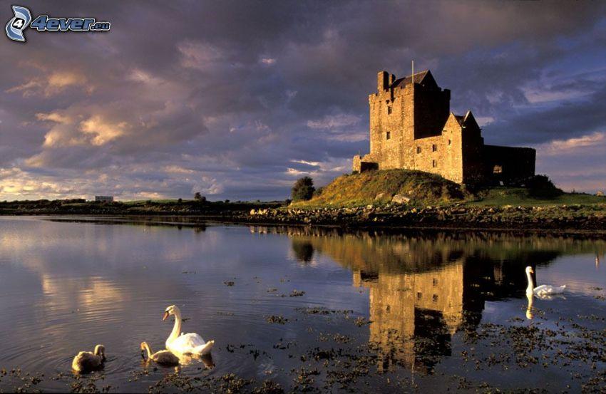 Dunguaire Castle, jezioro, łabędzie
