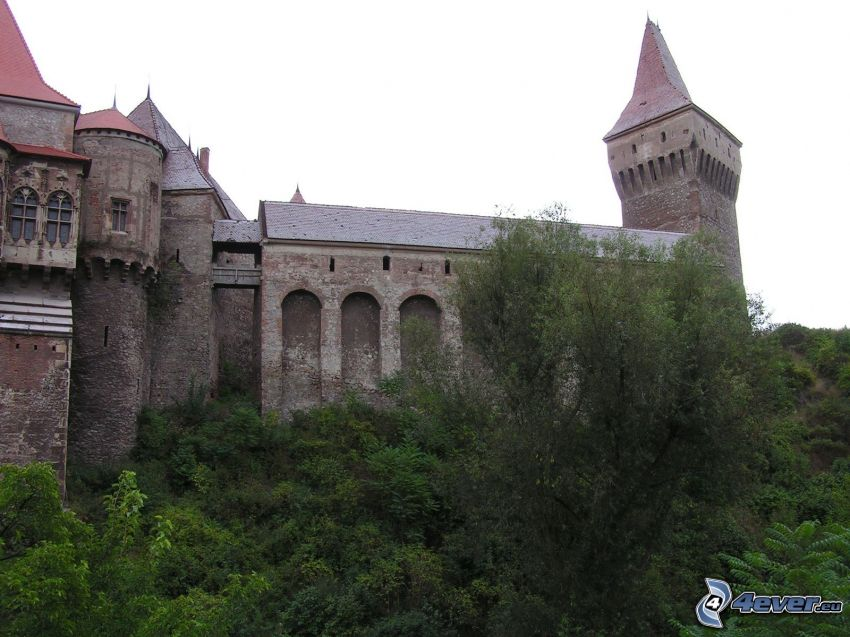 Hunyad, zamek, drzewa