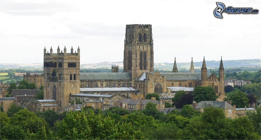 Katedra w Durham, drzewa
