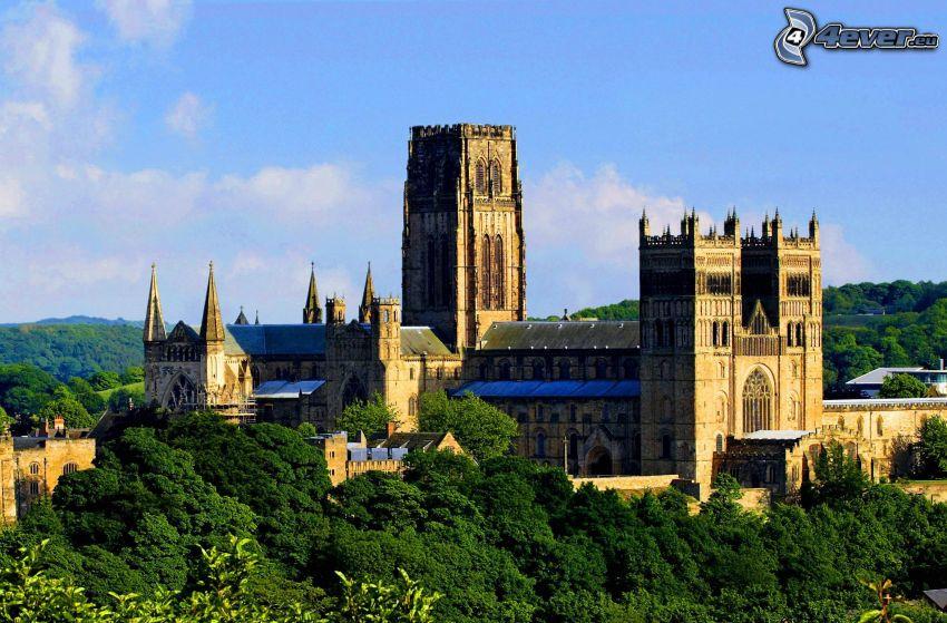 Katedra w Durham, las
