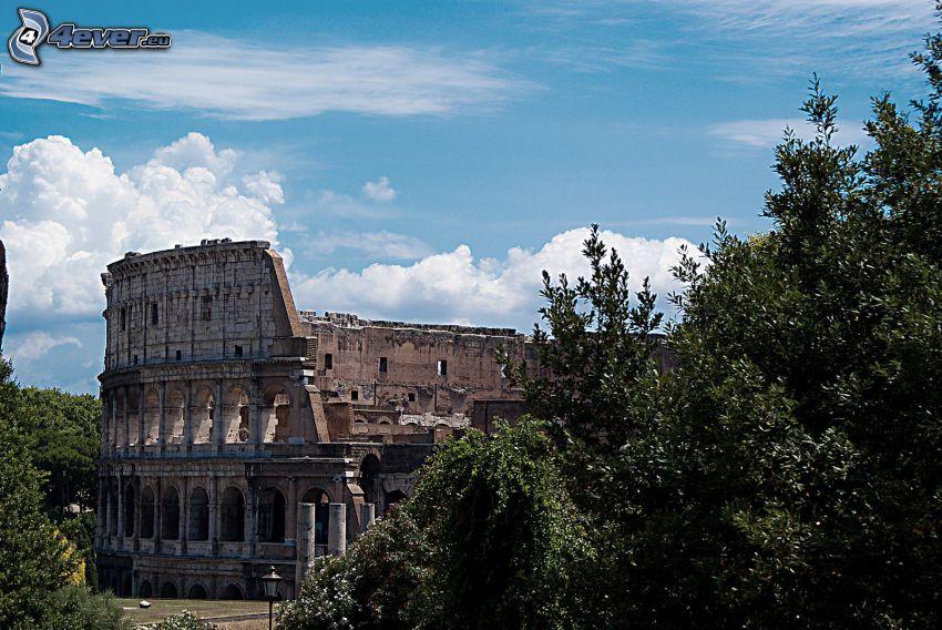 Kolosseum, Rzym, Włochy, drzewa