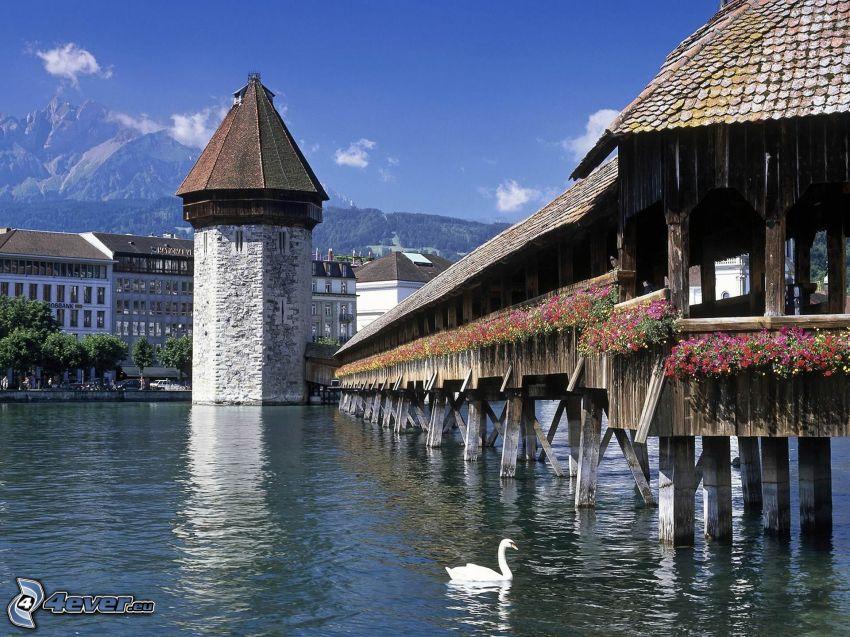 Lucerna, Szwajcaria, drewniane molo, rzeka, łabędź