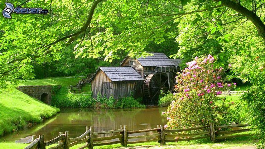Mabry Mill, zielone drzewa, drewniany płot, fioletowe kwiaty, rzeka