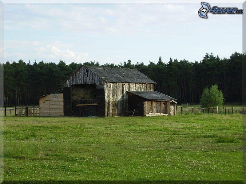 stodoła, zielona łąka, gospodarstwo, las iglasty