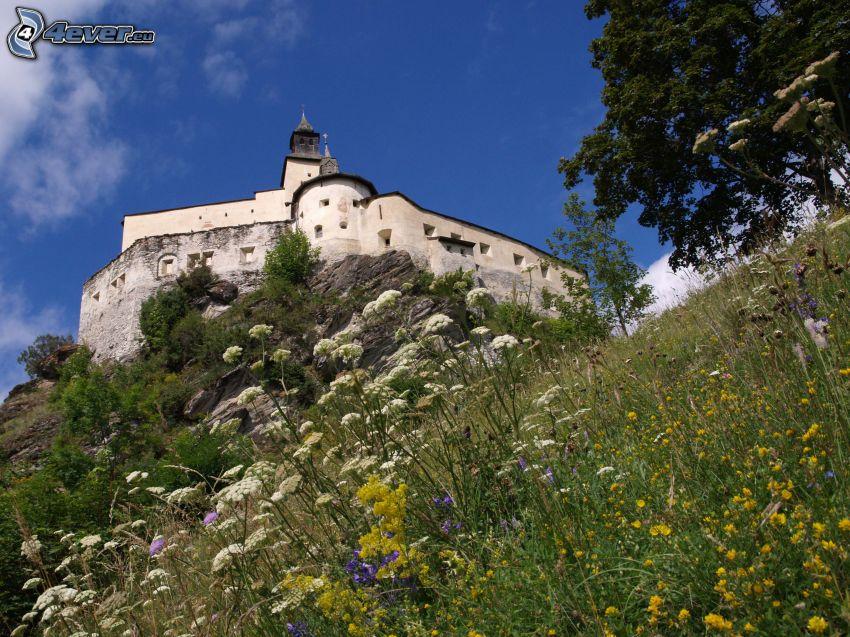 Zamek Tarasp, łąka, polne kwiaty