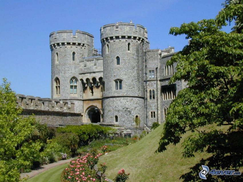 Zamek Windsor, drzewa, różowe róże