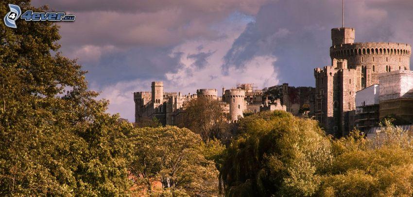 Zamek Windsor, las, drzewa