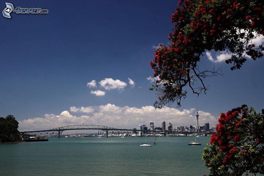 Auckland Harbour Bridge, czerwone kwiaty, statki, chmury