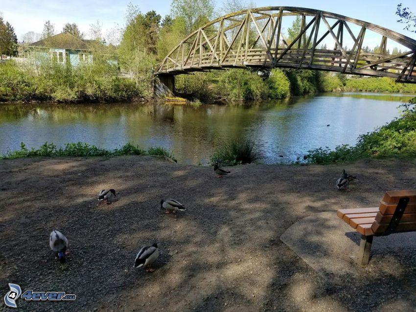 Bothell Bridge, rzeka, ławeczka, kaczki, domek