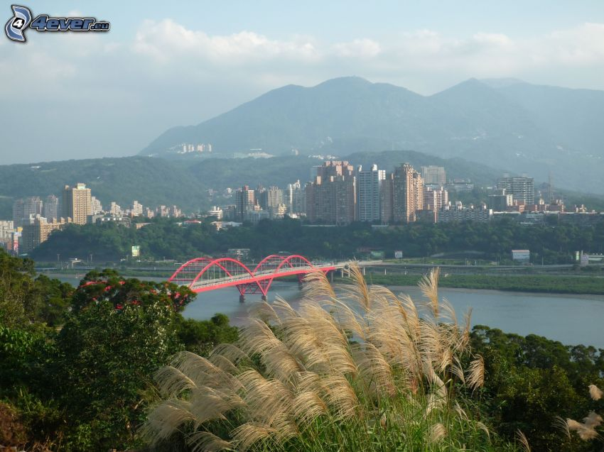 Guandu Bridge, wysoka trawa, wieżowce