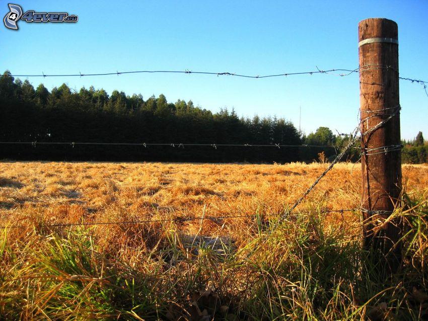 ogrodzenie z drutu, las, łąka