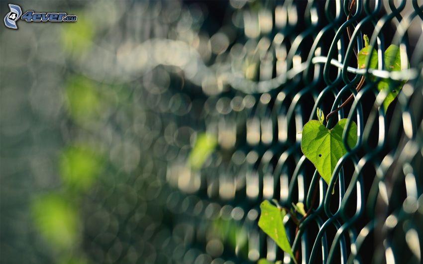 ogrodzenie z drutu, zielone liście