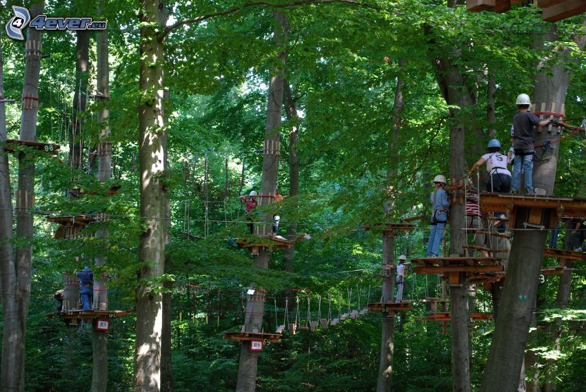 park linowy, las, drzewa