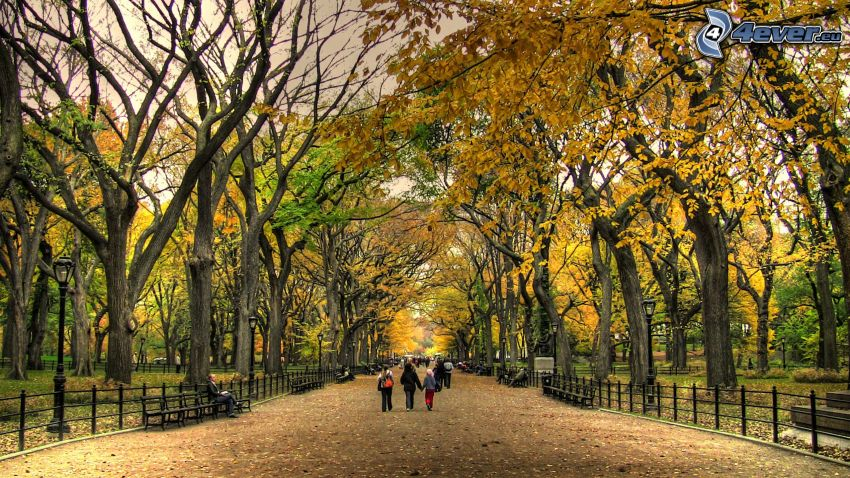 Central Park, Drzewa w parku