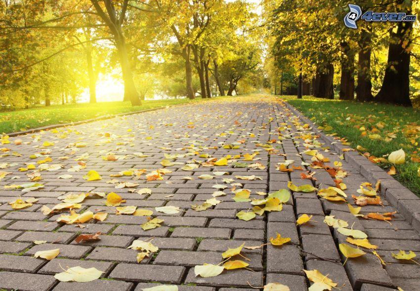 chodnik, żółte liście, park przy zachodzie słońca, drzewa
