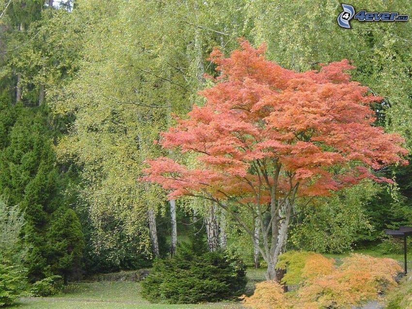 Drzewa w parku, kolorowe drzewa