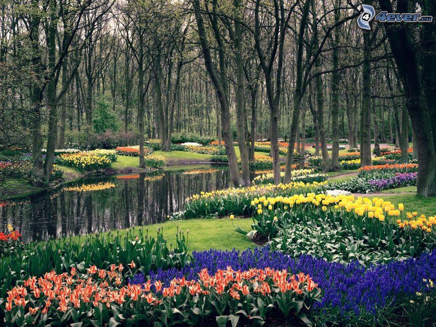 Drzewa w parku, tulipany, jezioro