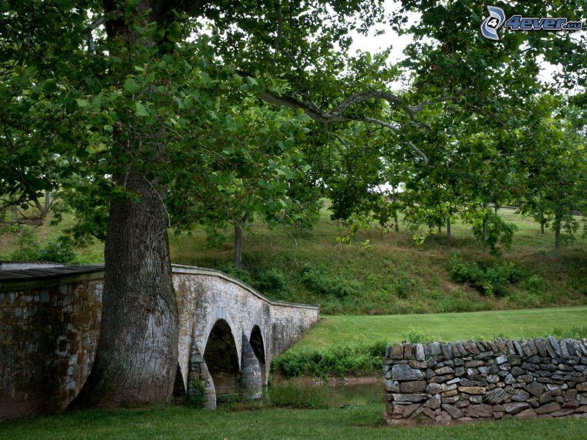 kamienny most, rzeka, drzewa