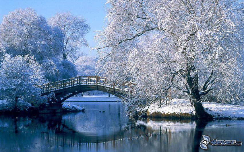 zaśnieżony park, drewniany most, zamarznięte drzewo