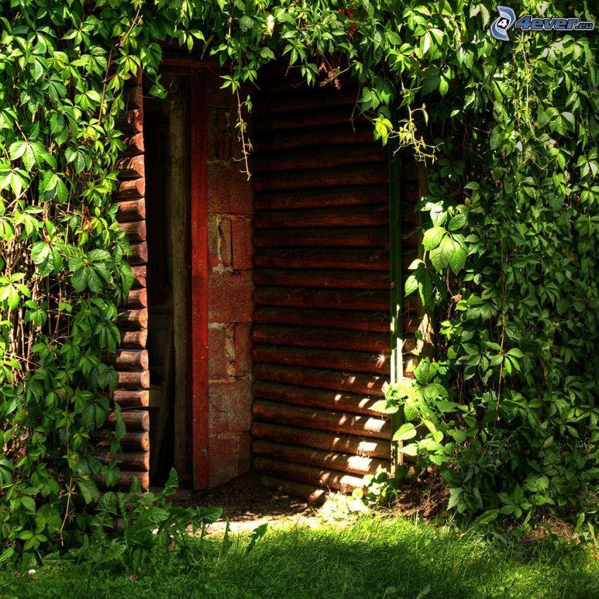 stare drzwi, zielone liście