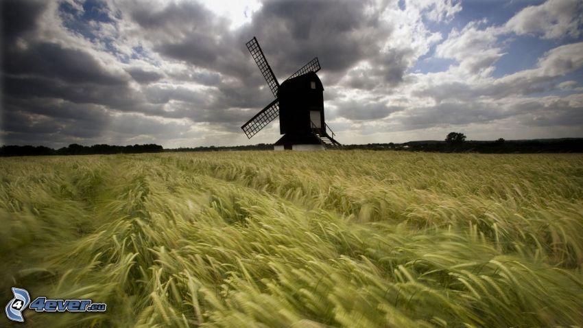 wiatrak, pole pszenicy, ciemne chmury